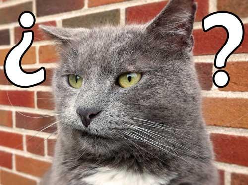 gato-dudando